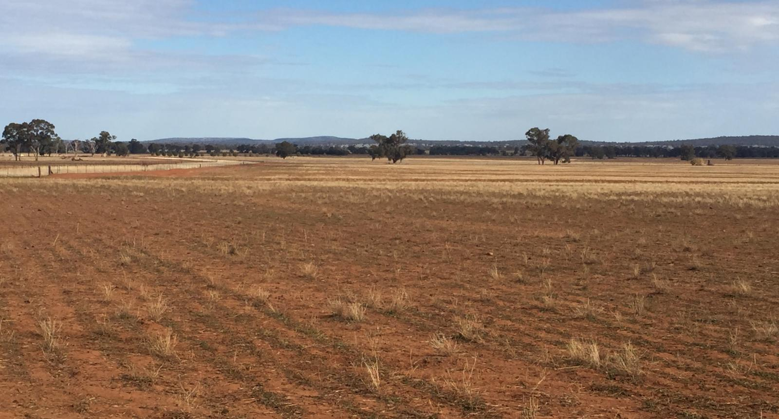 NSW Drought Landscape