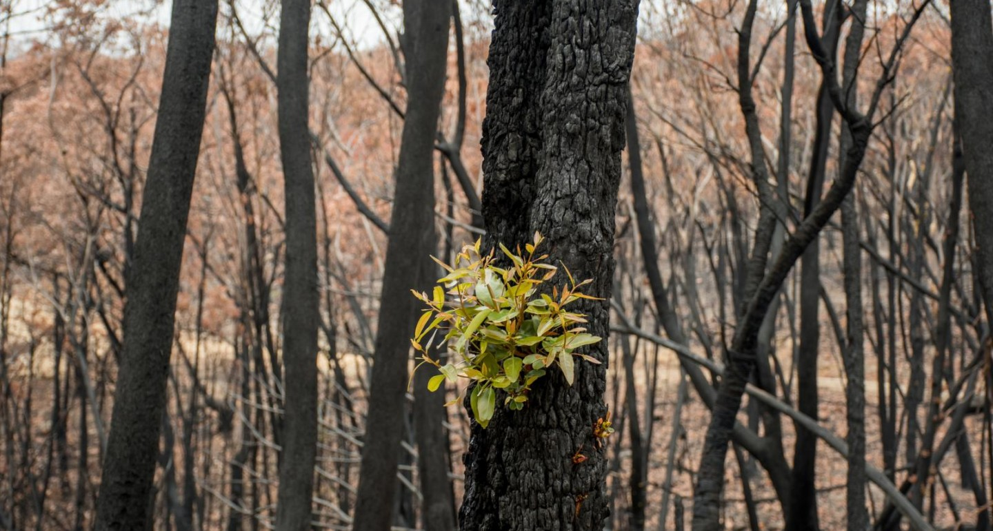 Vinnies Bushfire Recovery National Appeal